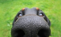 Нос (физиогномика)