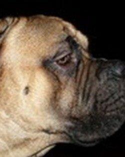Пёс Лео